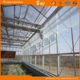 Высокое качество Glass Greenhouse Top Covered PC Board