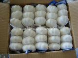 Chinesischer frischer Knoblauch für den Export
