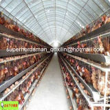 Высокое качество Automatic Chicken Cage Poultry Equipment для Layers