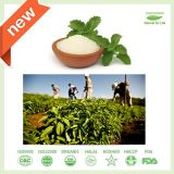 Extrato erval do Stevia do edulcorante natural do Stevia