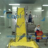 Congélateur fluidisé d'IQF pour le raccord en caoutchouc d'haricots de maïs de fruits de légumes