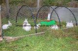 低炭素鋼鉄が付いている電流を通された六角形の金網/家禽の網