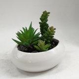 Il Succulent artificiale pianta la decorazione dei bonsai