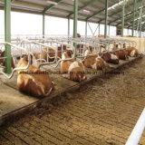 Edificio barato de la vertiente de la vaca de la estructura de acero para la venta