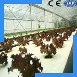 Système hydroponique agricole simple