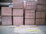 peuplier de placage de faisceau de peuplier de 1.3mm 1270X840/640mm pour le marché de l'Egypte