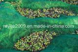 Réseau net olive agricole résistant UV d'échafaudage d'air libre
