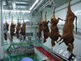 Conduite de purge de bétail