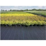 Geotêxtil tecido para o controle de Weed