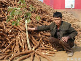 Amidon de manioc de pomme de terre de la Chine faisant la chaîne de production machine