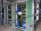 Cage automatique de couche de batterie de type de H