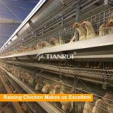 Matériel d'aviculture de projet de ferme de poulet à vendre