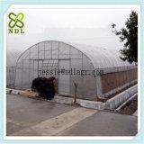 Handelsc$multi-bucht Agra-Tunnel-grünes Haus