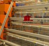 Gaiola do equipamento das aves domésticas do frame de aço para a galinha