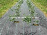 Jardim superior da tela do controle da esteira de Weed