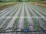 Tela preta da esteira do controle de Weed com plantação da linha