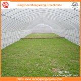 Landwirtschaft/Handels-PET Film-Tunnel-Gewächshäuser für Erdbeere/Rose