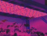 에너지 절약 여분 얇은 400W 고성능 80X5w LED는 빛을 증가한다