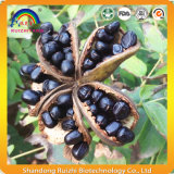 Óleo de semente de peônia natural a partir de extrato de ervas