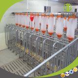 Système alimentant automatique de chaîne de porc de qualité utilisé dans la ferme de porc moderne à vendre