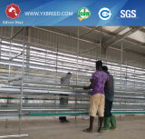 ケニヤの大きい農場への熱い電流を通された層電池ケージ