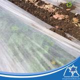 Tessuto non tessuto amichevole di Eco pp Spunbond per la verdura