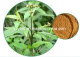 5:1 naturale puro di risoluzione ~20 dell'estratto del Eupatorium di fortuna dell'iperina di umidità: 1