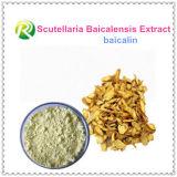 Extracto Baicalin de Baicalensis del Scutellaria de la alta calidad
