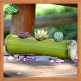 Saftiger Pflanzenpotentiometer-handgemachter Bambusblumen-Potenziometer