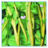 Kunststoffträger-Ineinander greifen für Pflanze