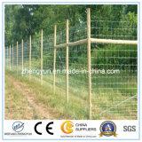 Дешевая гальванизированная загородка /Small загородки ячеистой сети животная (фабрика)