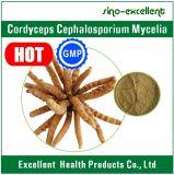 Cordyceps Cephalosporium 균사, Cordyceps 추출