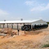Moderner schlüsselfertiger Geflügelfarm-Aufbau mit Gerät &Prefab Geflügel-Halle