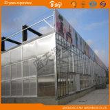 Invernadero largo hermoso del vidrio de la estructura de Venlo de la vida útil