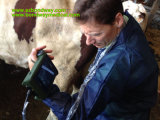 Varredor portátil do ultra-som para o cuidado animal, para reprodutores bovinos, fazendeiros, clínicas de Veterian
