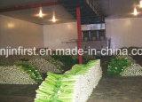 نباتيّة ثمرة وطعام تخزين [كلد رووم] لأنّ عمليّة بيع