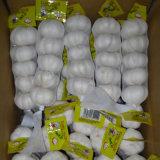 Aglio cinese bianco puro fresco (5.0cm ed aumentano)