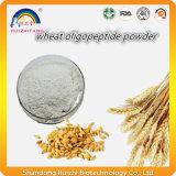 100% 수용성 밀 Oligopeptides 밀 단백질 분말