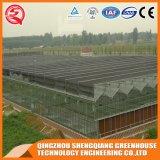 중국 농업 채소밭 강화 유리 온실