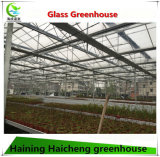 Дом горячей Multi-Пяди Venlo сбываний стеклянная зеленая