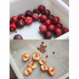 Snocciolatore automatico della prugna, macchina della puntinatura della ciliegia dell'albicocca
