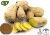 Extracto del jengibre de Gingerols el 5%/Zingiber naturales Officinale/CAS No.: 84696-15-1