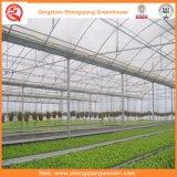 Garten/Landwirtschaft des Tunnel-Plastikfilm-grünen Hauses für Gemüse-/Blumen-wachsendes