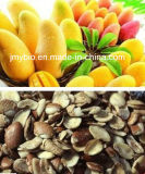 100%の自然なアフリカのマンゴのシードのエキス/20:1/減量およびAnti-Aging