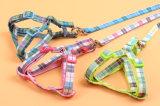 애완 동물 제품 공급 개 고양이 강아지 다채로운 하네스 (H007)