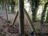 Rete fissa esagonale del giardino del collegare di Sailin