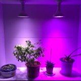 O bulbo cheio do diodo emissor de luz do espetro cresce claro para plantas internas