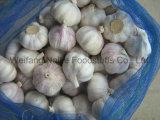 2015 새로운 작물 중국 신선한 마늘