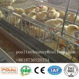Le poussin de batterie de poulette met en cage le petit matériel d'aviculture de poulet
