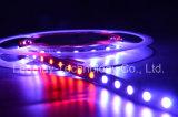 최신 판매는 마술 또는 꿈 색깔 빛 유연한 LED 지구 빛을 꾸민다
